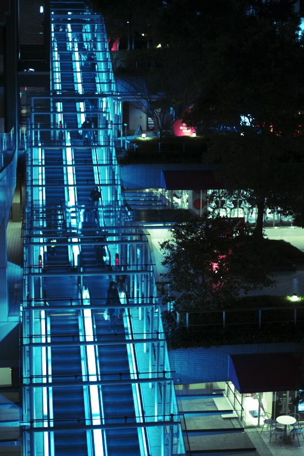 5D_20110119_0154.jpg